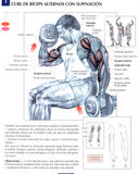 http://img25.imagevenue.com/loc418/th_74200_Brazos_01__Curl_de_biceps_alterno_con_supino_122_418lo.jpg